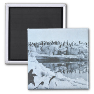 Penguin Herd Magnets