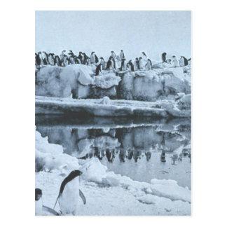 Penguin Herd Postcard