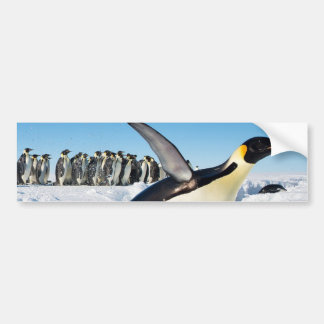 Penguin in Antarctica Jumping Out of the Water Bumper Stickers