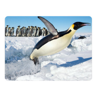 Penguin in Antarctica Jumping Out of the Water Card