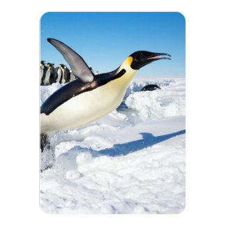 "Penguin in Antarctica Jumping Out of the Water 4.5"" X 6.25"" Invitation Card"
