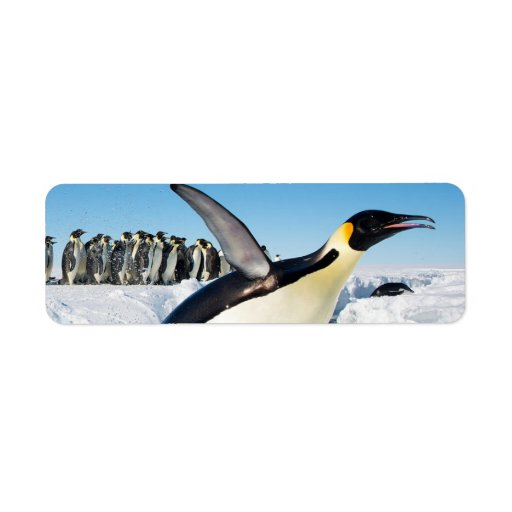 Penguin in Antarctica Jumping Out of the Water Custom Return Address Label