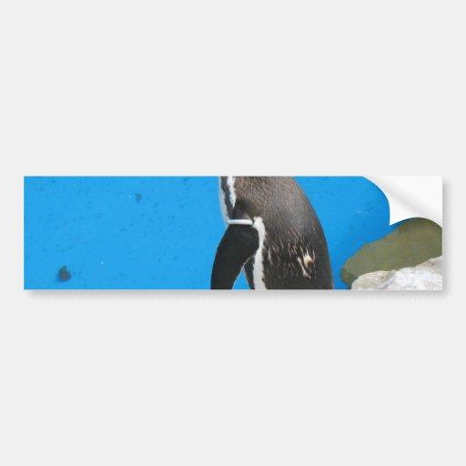 Penguin In Harewood Park Bumper Stickers