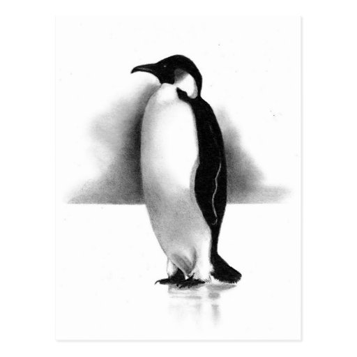 PENGUIN IN PENCIL: REALISM ART POSTCARD