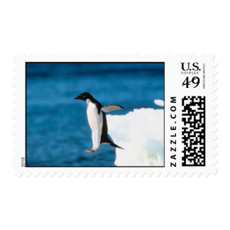 Penguin Jumping Stamp