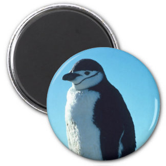 Penguin Looking out Fridge Magnet