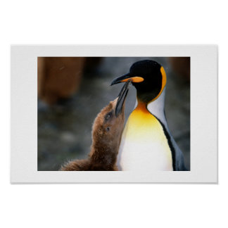 penguin,lovely poster