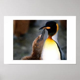 penguin,lovely poster