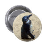 Penguin on sand pinback buttons