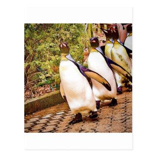 Penguin Parade Postcard