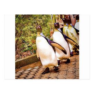 Penguin Parade Post Card