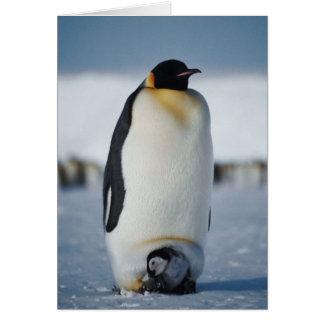 Penguin Parent & Chick Card
