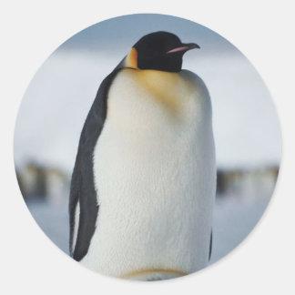 Penguin Parent & Chick Sticker