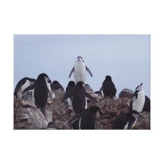 Penguin Power on Canvas Stretched Canvas Print