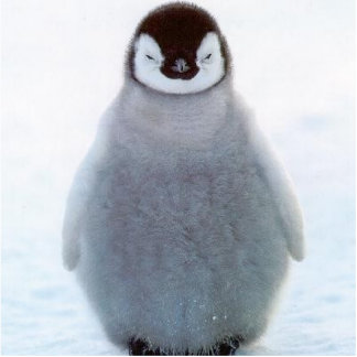 Penguin sculpture photo sculptures
