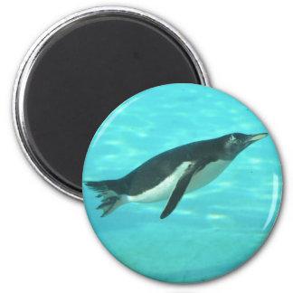 Penguin Swimming Underwater 2 Inch Round Magnet