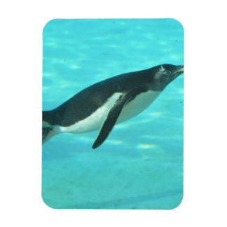 Penguin Swimming Underwater Rectangular Photo Magnet