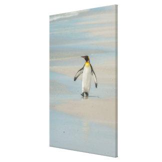 Penguin walking on the beach canvas print