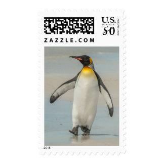 Penguin walking on the beach postage