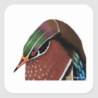 Penguin Wood Duck Square Sticker