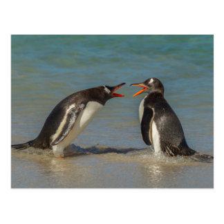Penguins arguing, Falkland Islands Postcard
