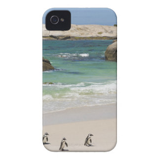 Penguins at Boulders Beach, Simons Town, South 2 iPhone 4 Cover