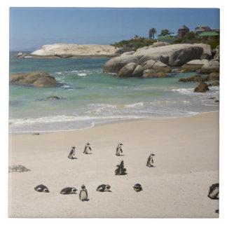 Penguins at Boulders Beach, Simons Town, South Ceramic Tile