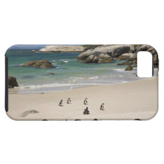 Penguins at Boulders Beach, Simons Town, South iPhone 5 Case