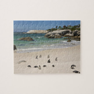 Penguins at Boulders Beach, Simons Town, South Jigsaw Puzzle