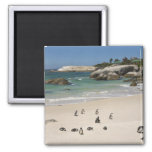 Penguins at Boulders Beach, Simons Town, South Refrigerator Magnet