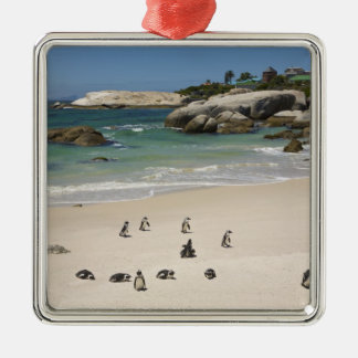 Penguins at Boulders Beach, Simons Town, South Metal Ornament