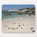 Penguins at Boulders Beach, Simons Town, South Mouse Pad