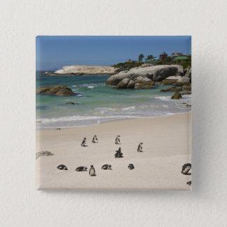Penguins at Boulders Beach, Simons Town, South Pinback Button