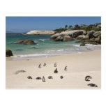 Penguins at Boulders Beach, Simons Town, South Postcards