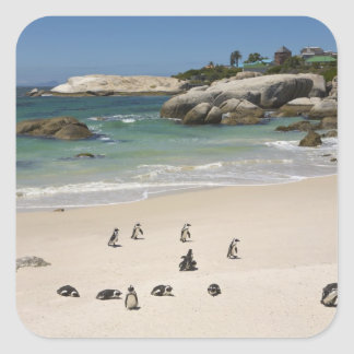 Penguins at Boulders Beach, Simons Town, South Square Sticker