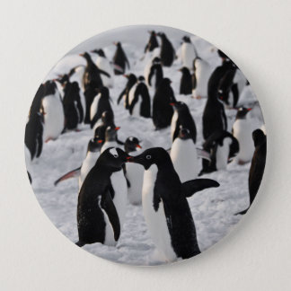 Penguins at Play Pinback Button