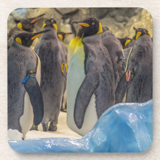 Penguins at the zoo hard plastic coasters