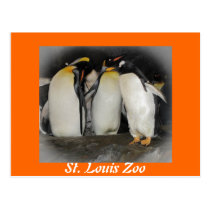 Penguins at the Zoo Postcard