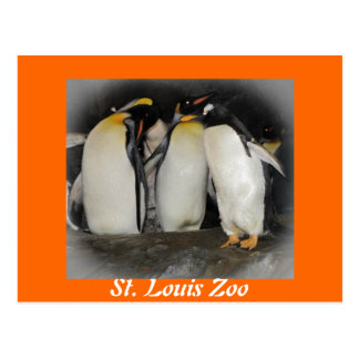Penguins at the Zoo Post Card