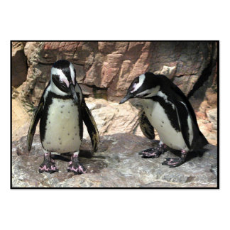 Penguins ATC Large Business Cards (Pack Of 100)
