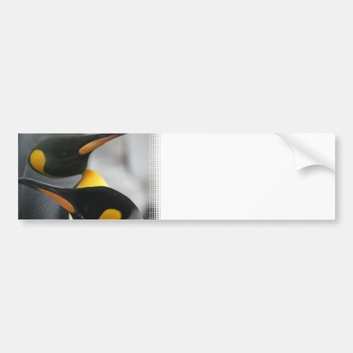 Penguins Bumper Stickers