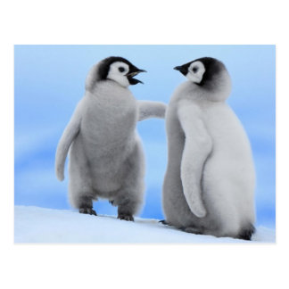 Penguins Chatting - Postcard
