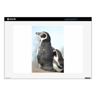 Penguins Decal For Laptop