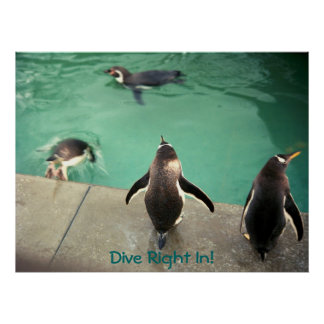 penguins Dive Right In! poster