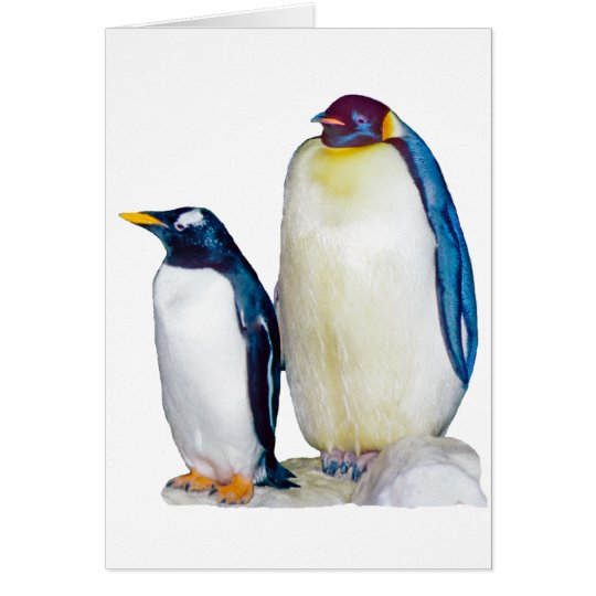 Penguins Drawing Card