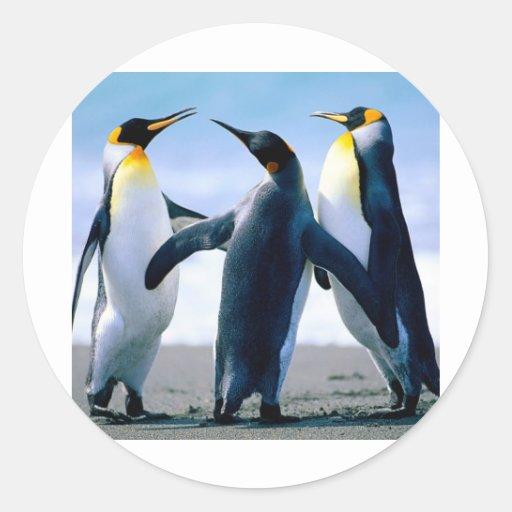 Penguins- Foto Maravilhosa Round Sticker