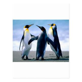 Penguins from Alaska Postcard