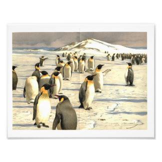 Penguins in Antarctica illustration Art Photo