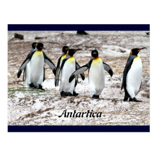 Penguins in frigid Antartic Postcard
