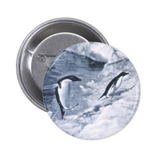 Penguins Jumping onto Land. 2 Inch Round Button